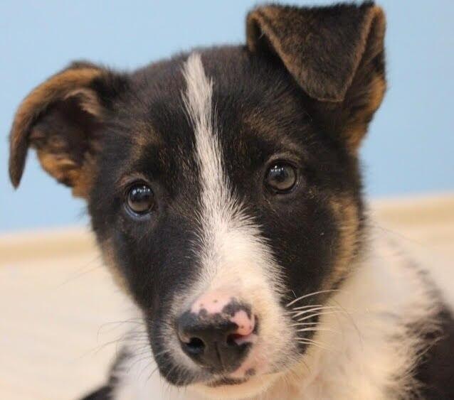 Сотрудники приютов для животных в СВАО пристроили 15 собак за время карантина