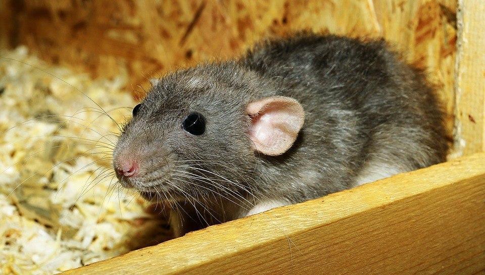 Специалисты провели обработку от грызунов в подъезде дома на Уржумской