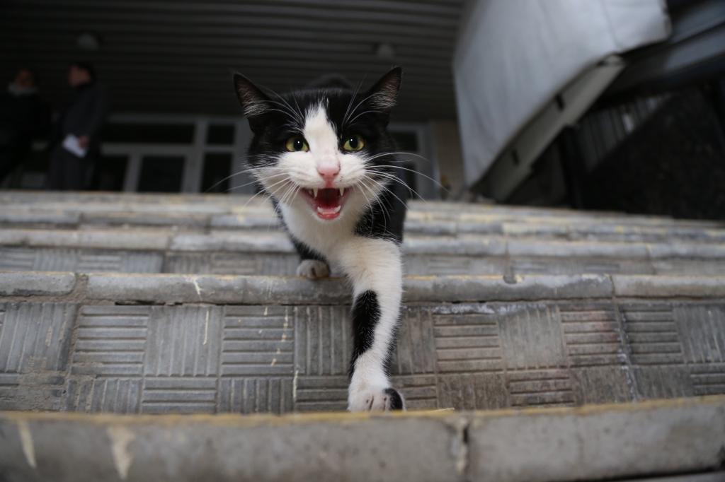 В «Парке Яуза» пройдет акция помощи бездомным животным