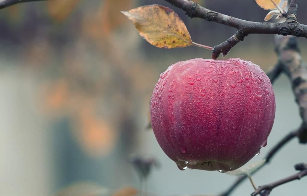 Участники занятий по «Домоводству» узнали о болезнях плодовых деревьев